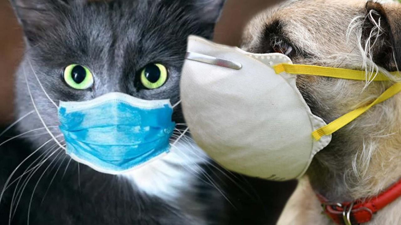 Kediler ve köpekler de karantinaya alınacak