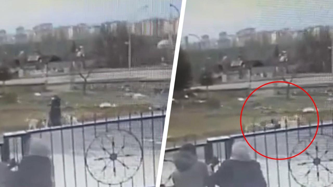 8 sokak köpeği kadına böyle saldırdı!