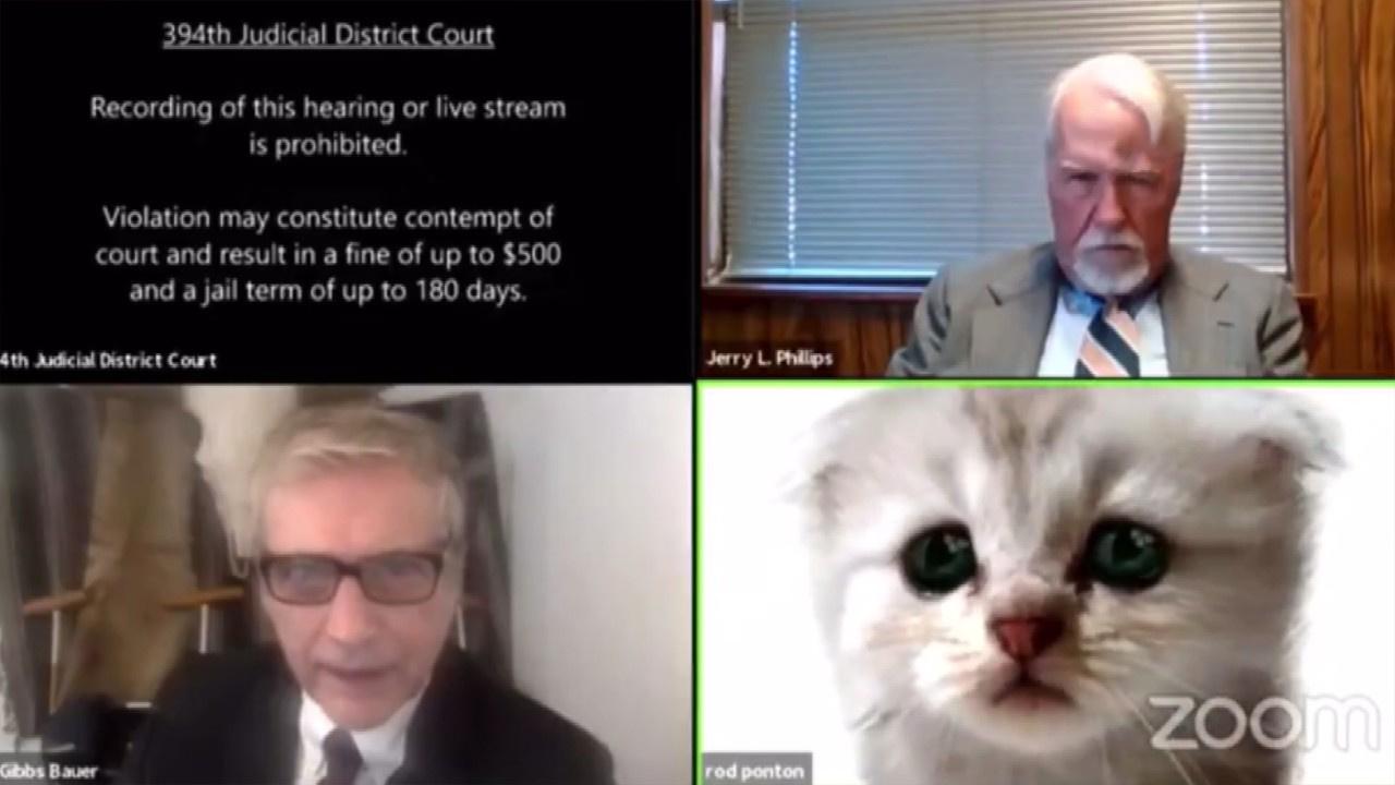 Avukat kedi olmadığına inandırmaya çalıştı!