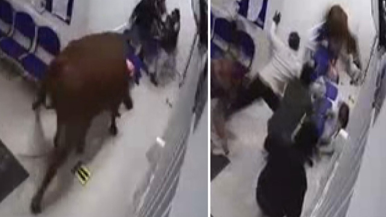 Kolombiya'da inek hastaneye daldı: 4 yaralı