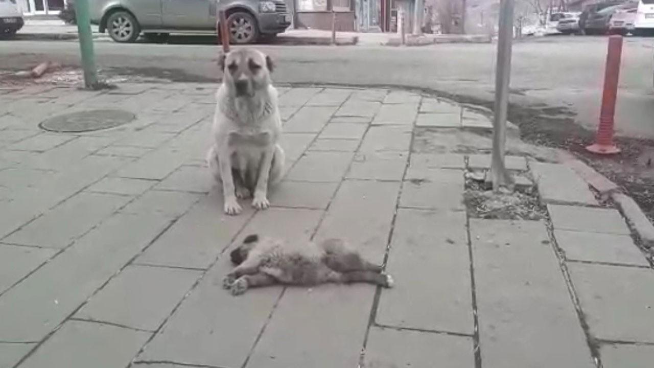 Ezilen yavrusunun başında saatlerce bekledi
