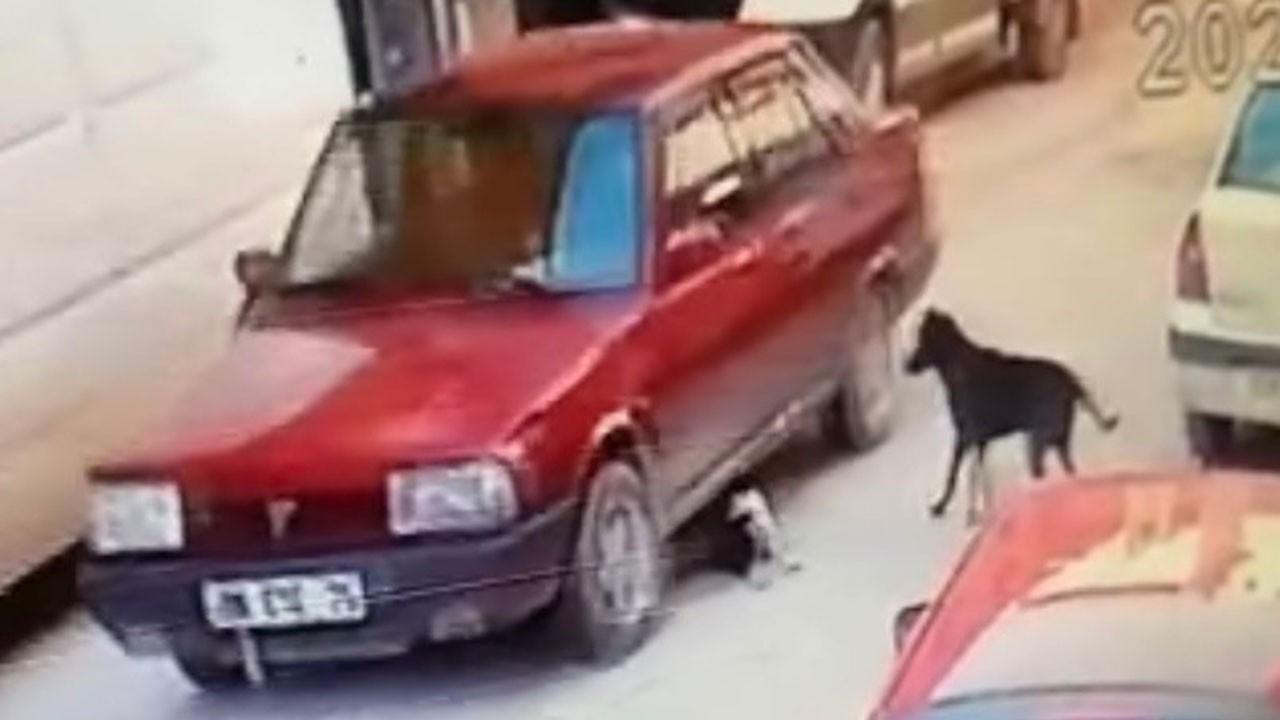 Yok böyle bir ceza! Yavru köpeği ezmek 1000 lira