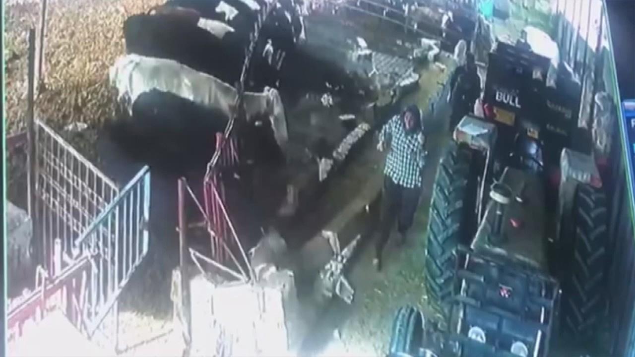 Aşı yapılacak hayvanlar demiri söküp duvarı yıktı
