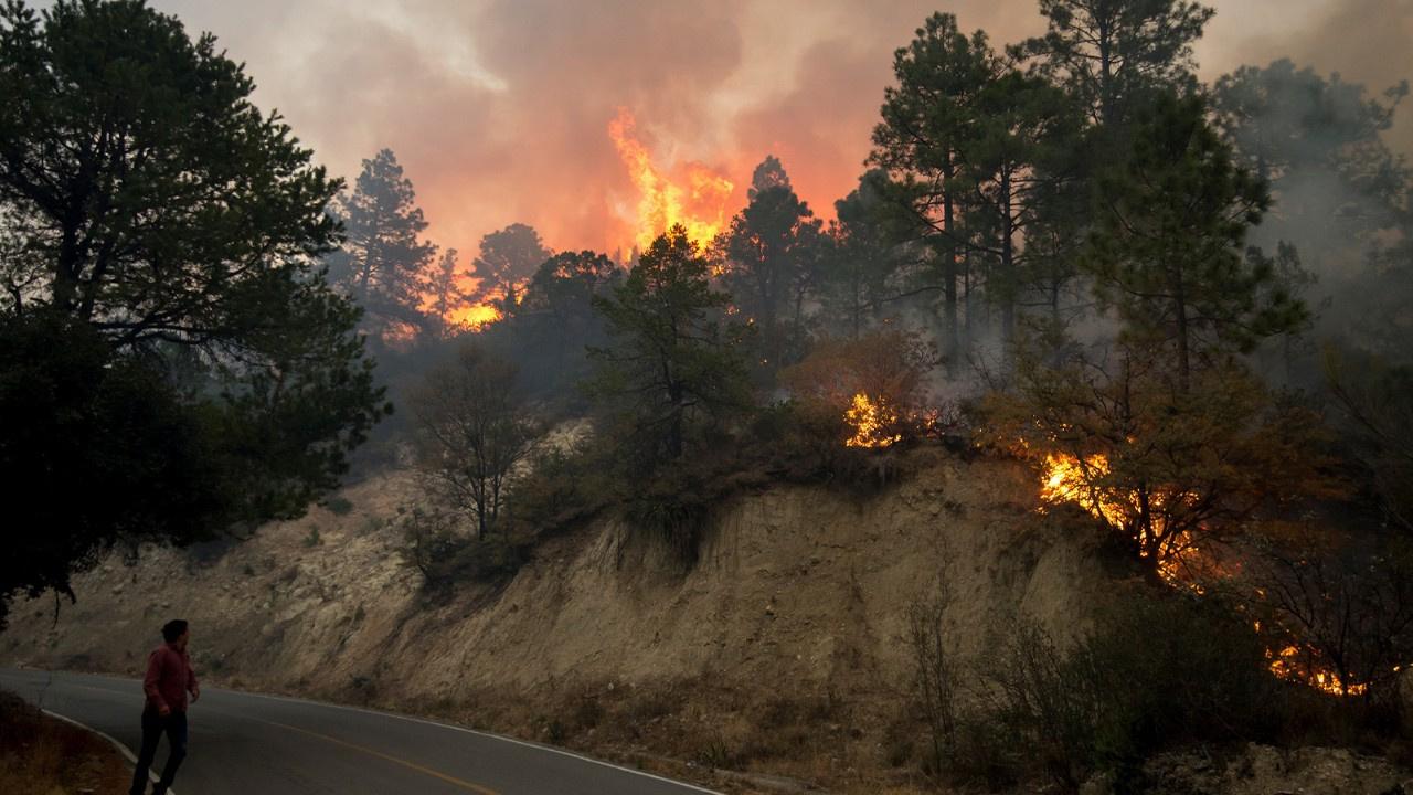 Meksika'da korkutan orman yangını