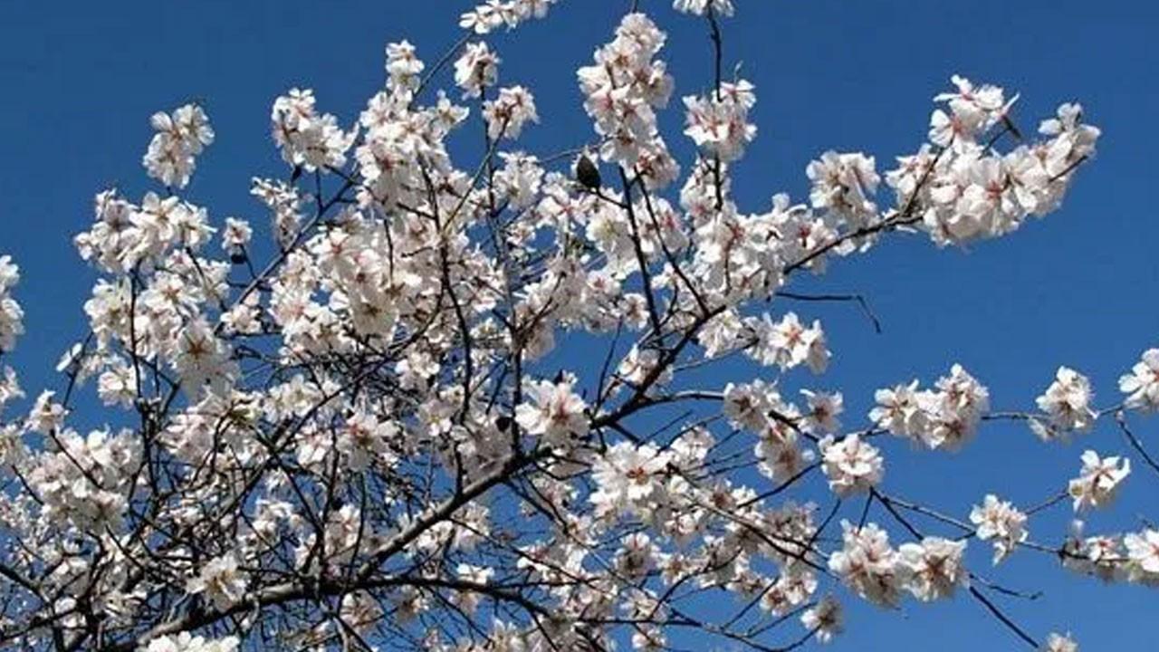 Baharın habercisi Nevruz bugün kutlanıyor!