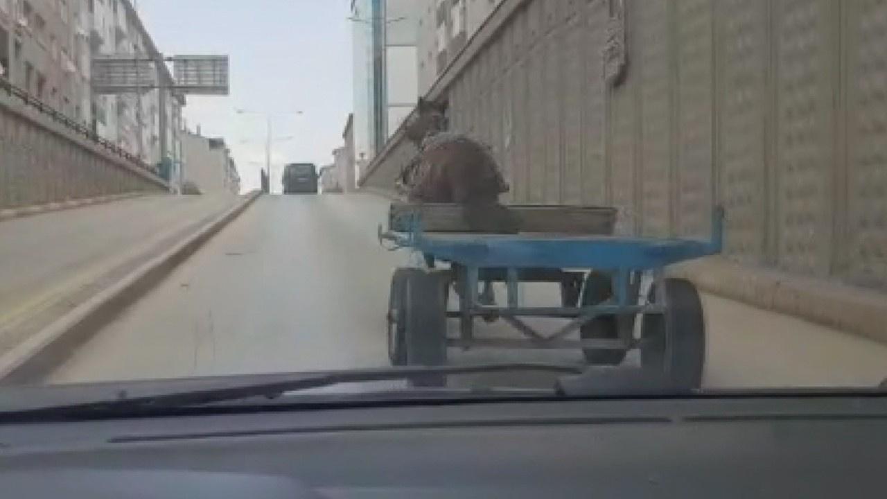 Kaçan at trafiği birbirine kattı!