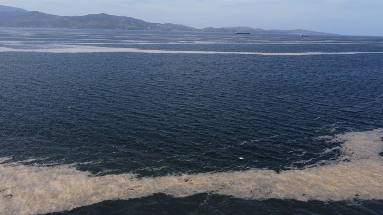 Deniz salyası Bandırma Körfezi'ne de yayıldı
