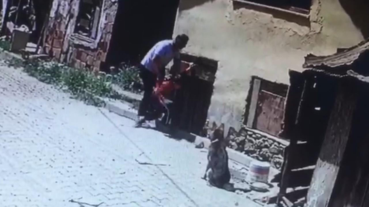Küçük çocuğu köpeklerin önüne attı