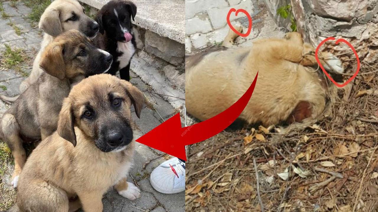 4 yavru köpekten 3'ünü katlettiler, biri kayıp