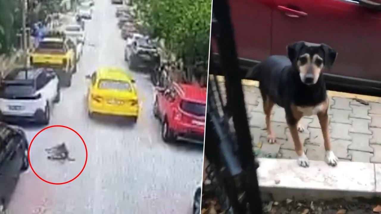 Dehşet veren olay! Taksici köpeği ezip kaçtı!