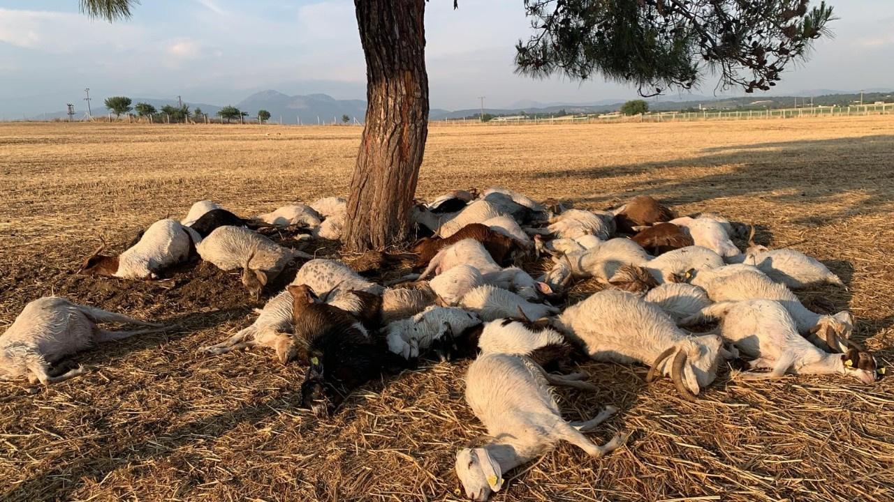 İzmir'de yıldırım şoku... 55 hayvan telef oldu