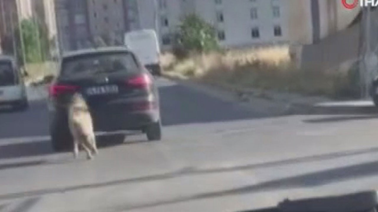 Köpeği kilometrelerce aracın peşinden koşturdu!