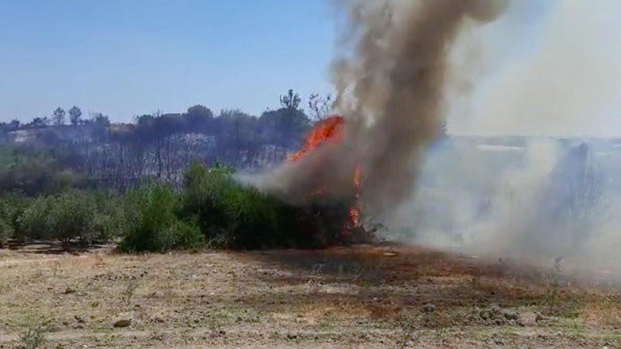 Antalya'da korkutan yangın! Zeytinliğe de sıçradı