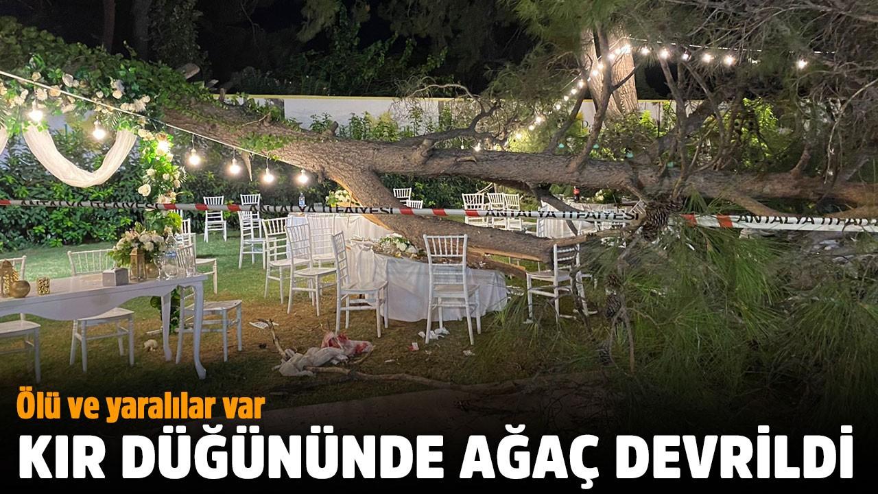 Kır düğününde ağaç devrildi: Ölü ve yaralılar var