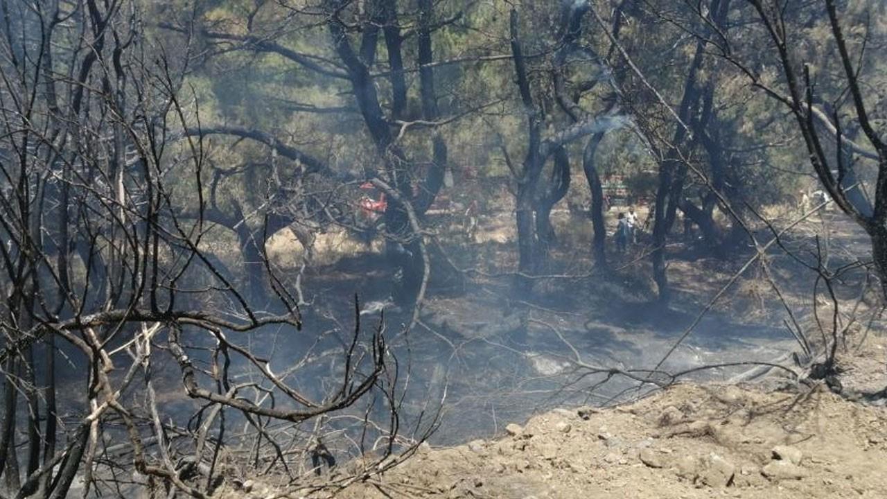 Muğla'nınDatçailçesinde yangın çıktı!