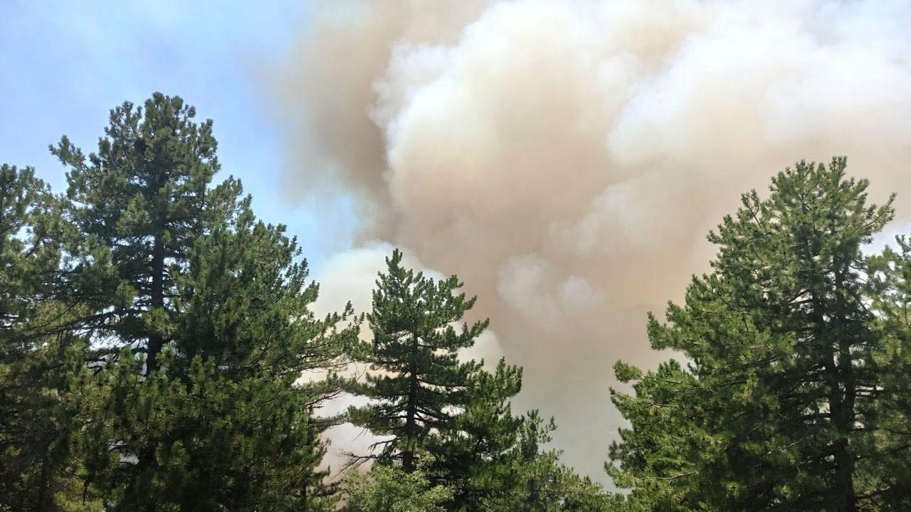 Son dakika... Kütahya'da orman yangını çıktı