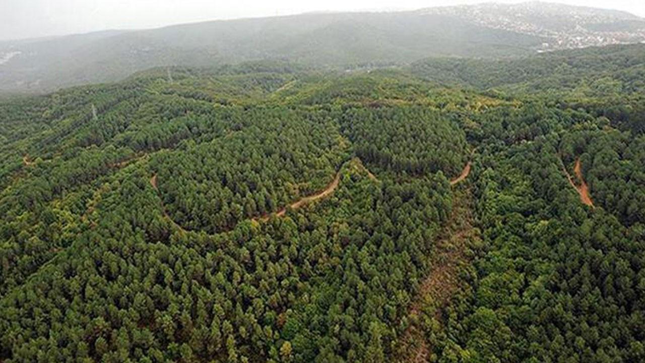 Valilik duyurdu! Ormanlara giriş 3 ay yasaklandı