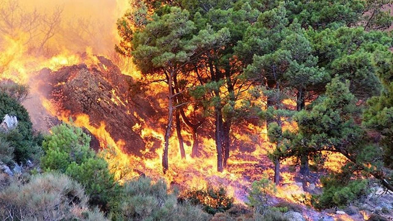 Bodrum'dan güzel haber! Yangın kontrol altına alındı