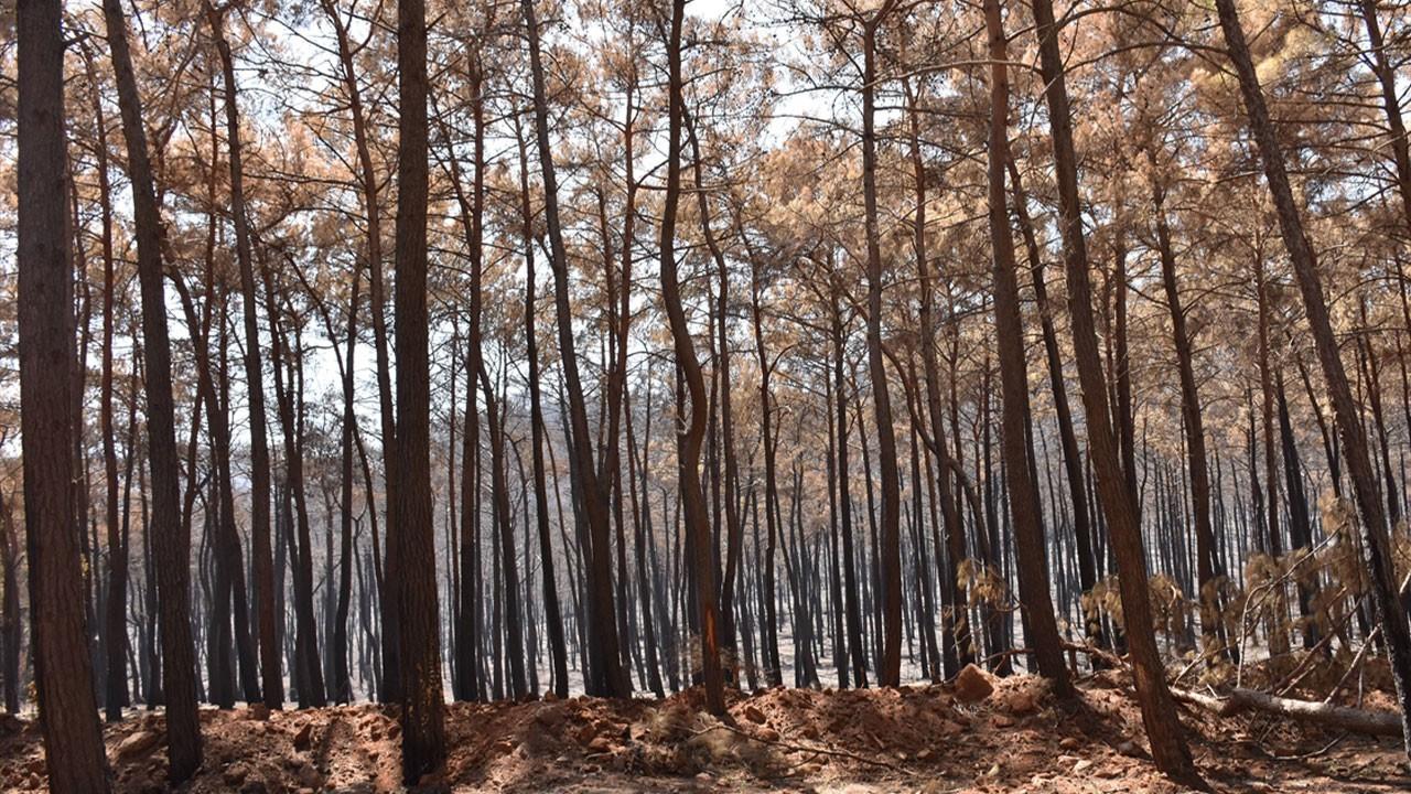 Ormanlık alanlara girişler yasaklandı