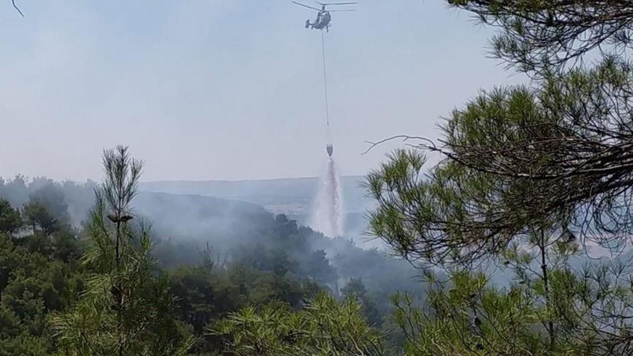 Uşak'ta orman yangını çıktı