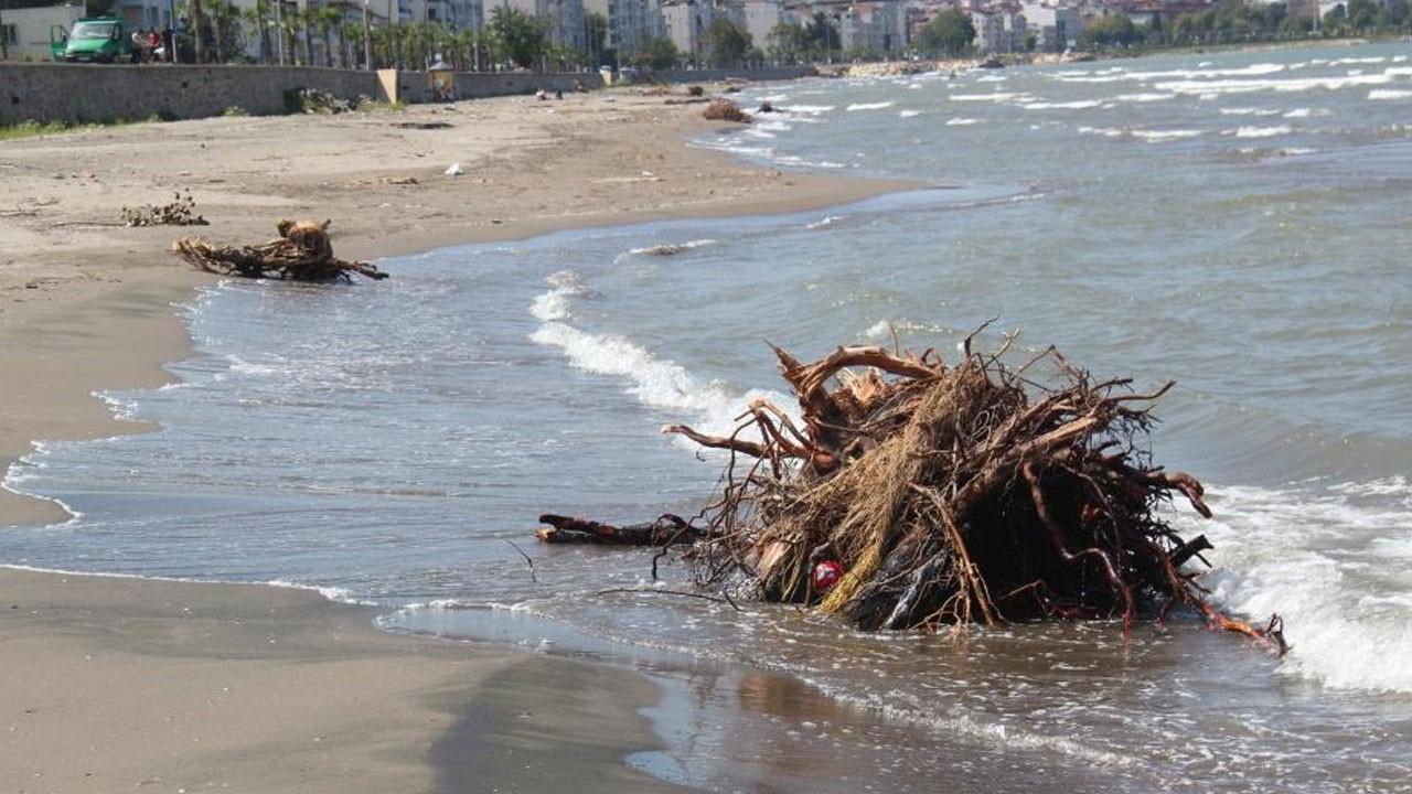 Sel sonrasında sahiller fındık ve ağaçlarla doldu