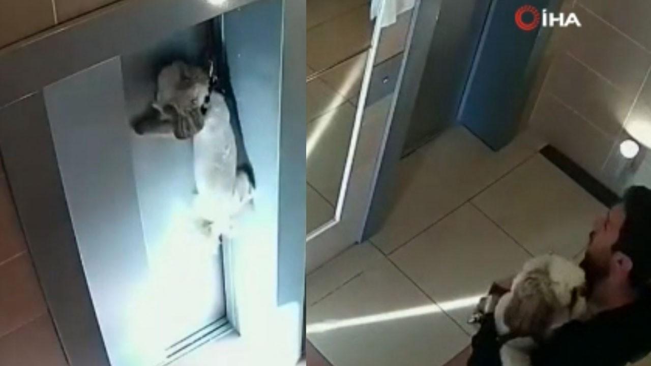Asansör kapısına sıkışan köpek, böyle kurtarıldı