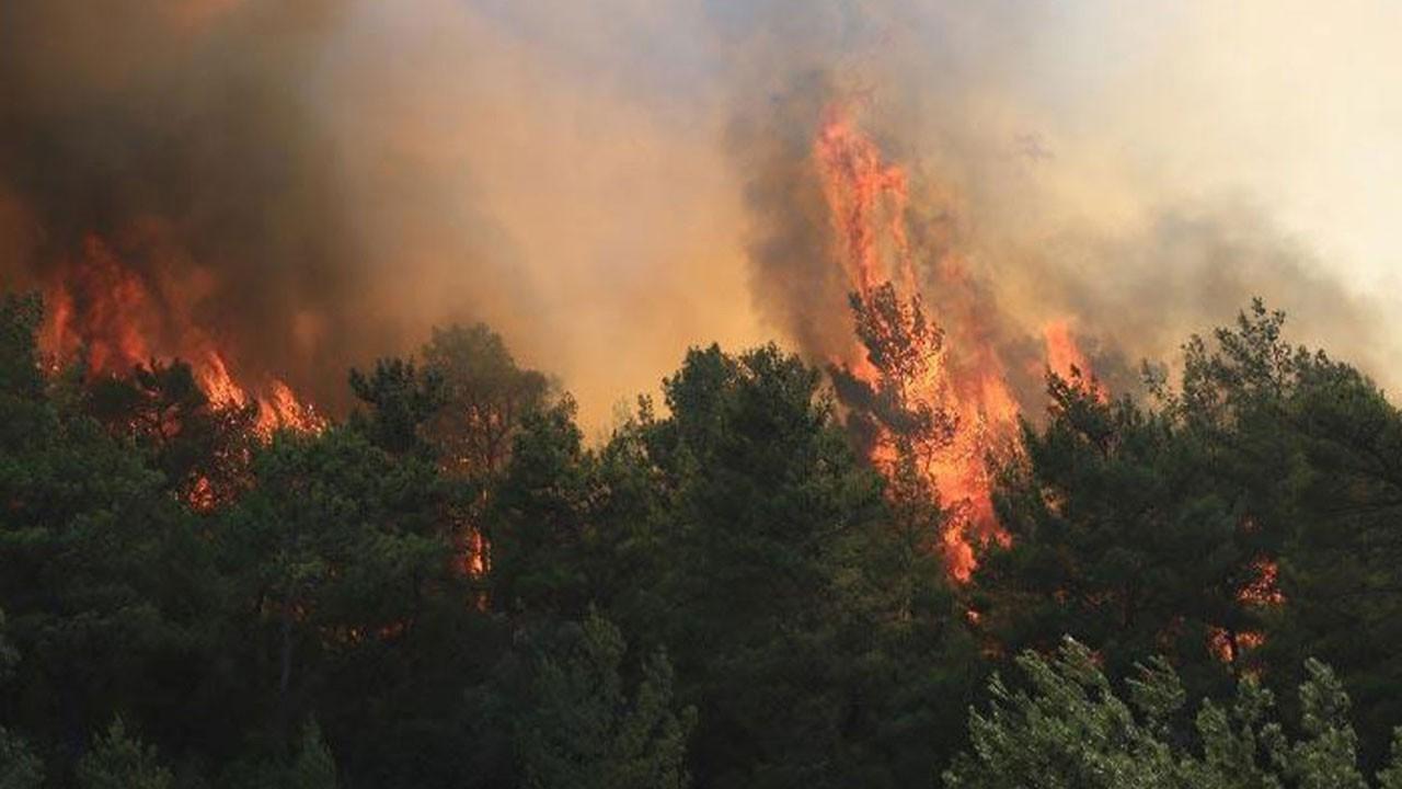 11 noktada orman yangını