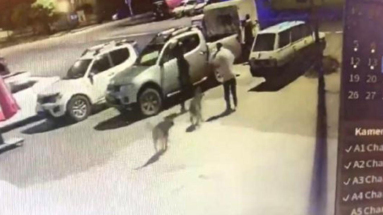 Personelin sokak köpeklerine eziyeti kamerada