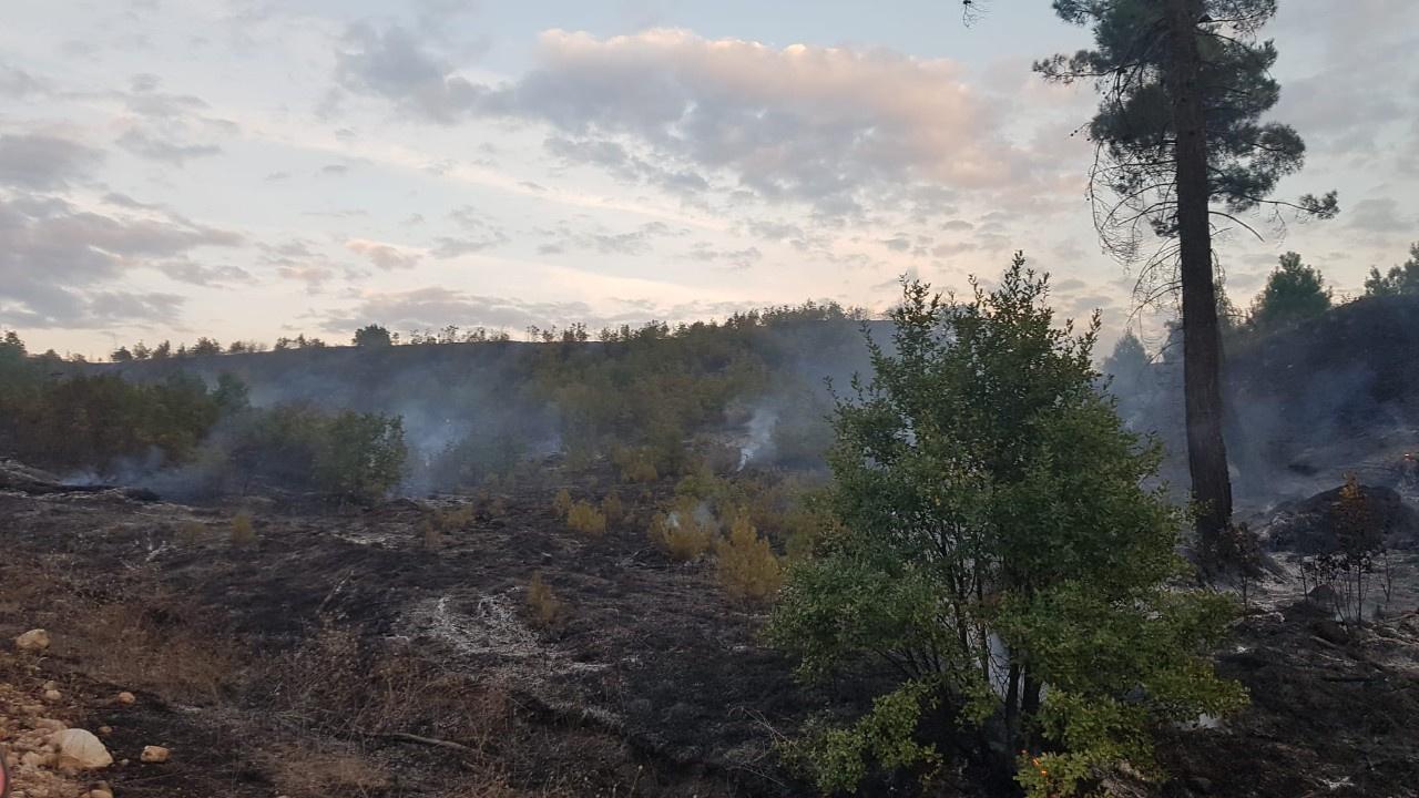 Kütahya'da 4 farklı noktada orman yangını alevler