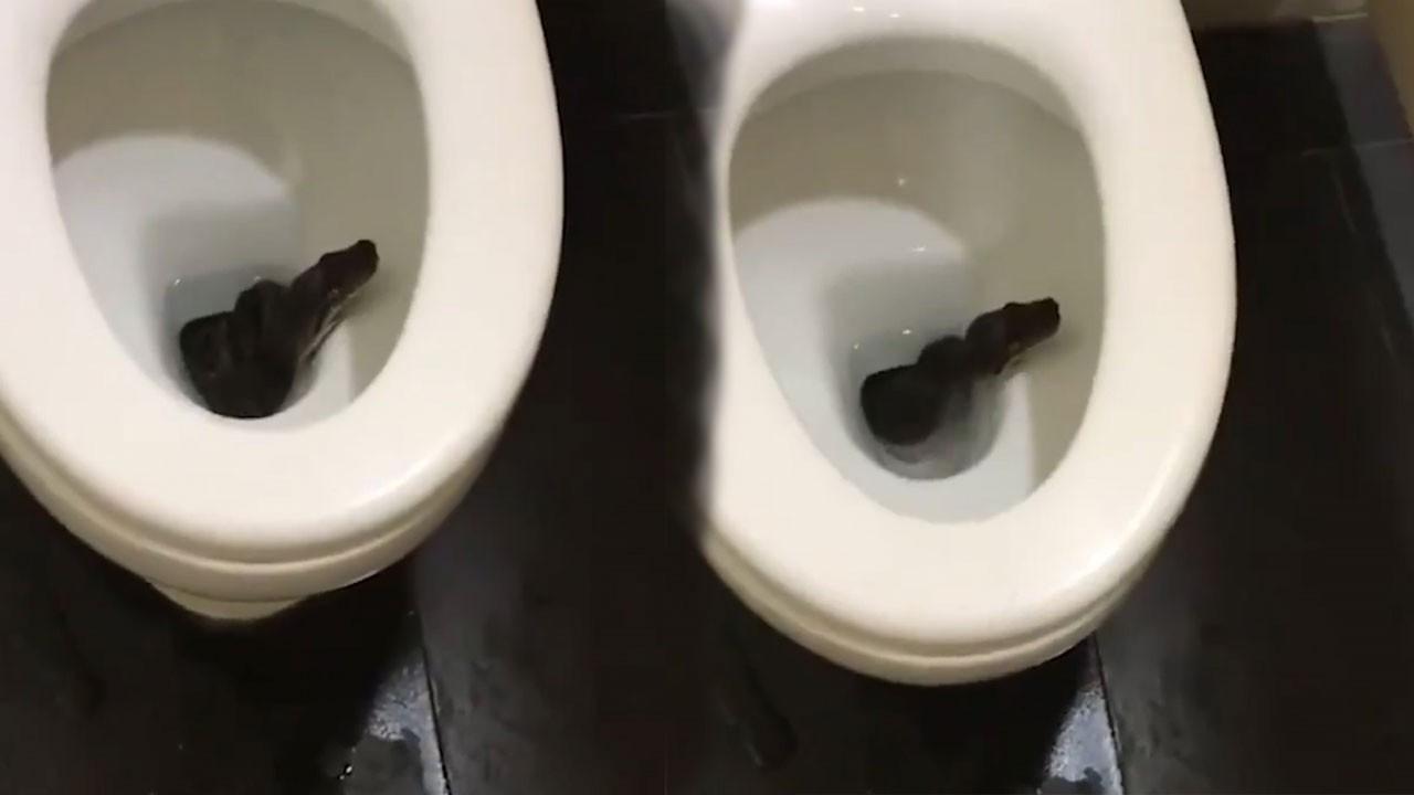 Tuvaletten yılan çıktı! O anlar kamerada