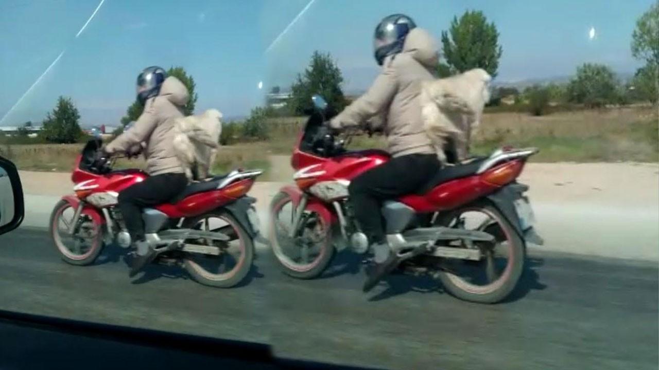 Motosikletlinin köpeğiyle tehlikeli yolculuğu!