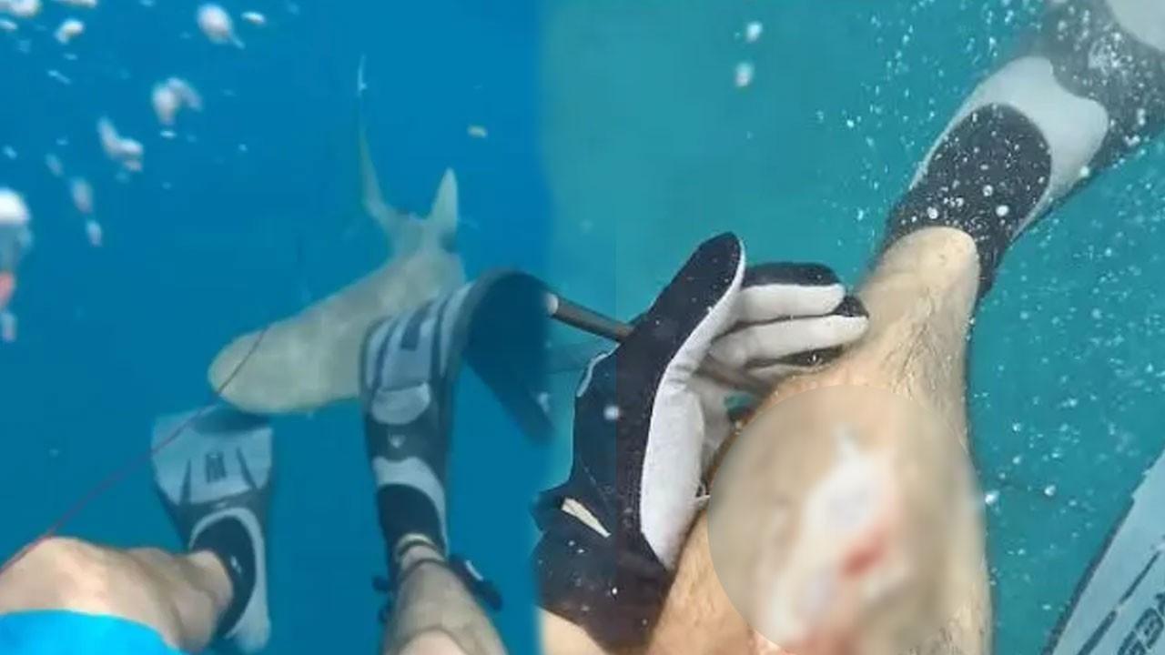 Okyanusta yüzen adama köpek balığı saldırdı