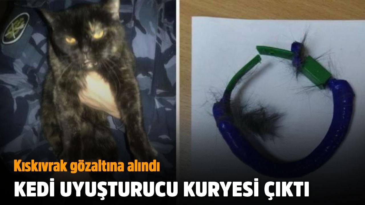 Uyuşturucu kuryeliği yapan kedi gözaltına alındı